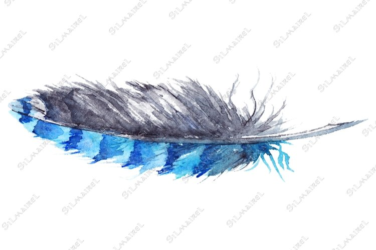 Watercolor black and blue jay feather vector isolated example image 1