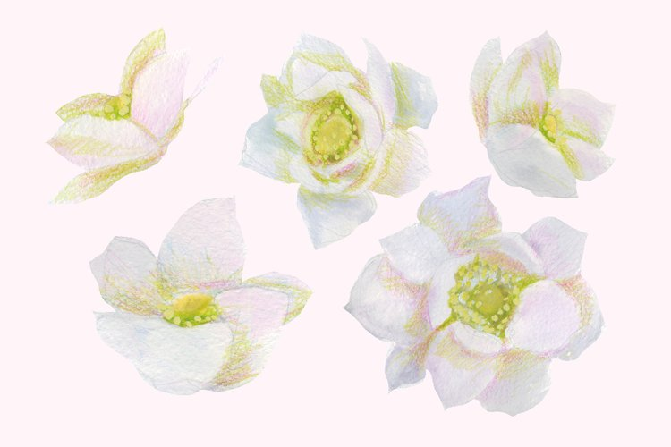 Floral Design Pack (watercolor & pastel) - Free Design of The Week Design5