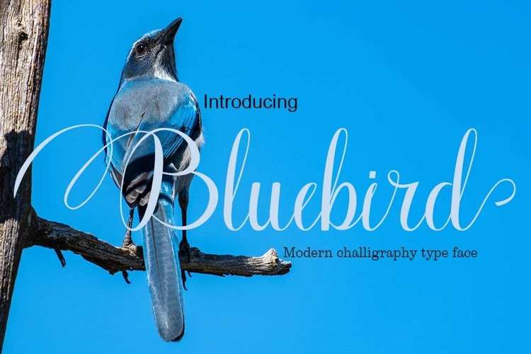 Bluebird example image 1