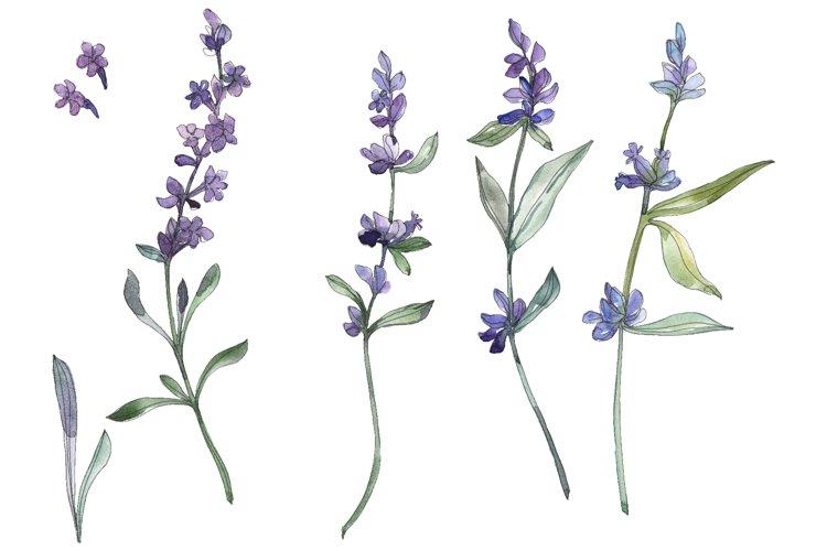 Bouquet summer breeze lavender watercolor png example image 1