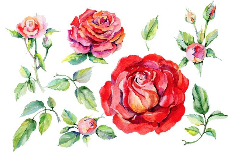Roses PNG watercolor flower set - Free Design of The Week Design0