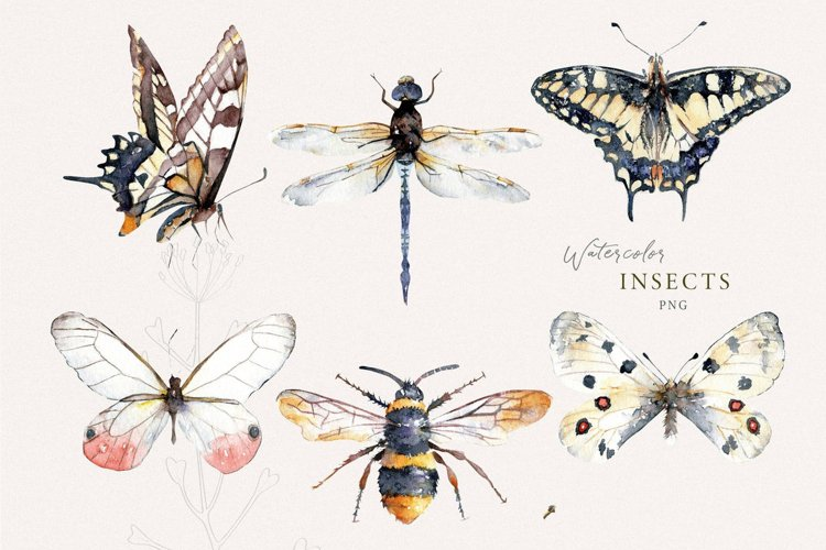 Insects watercolor clipart, butterflies, bee illustrations