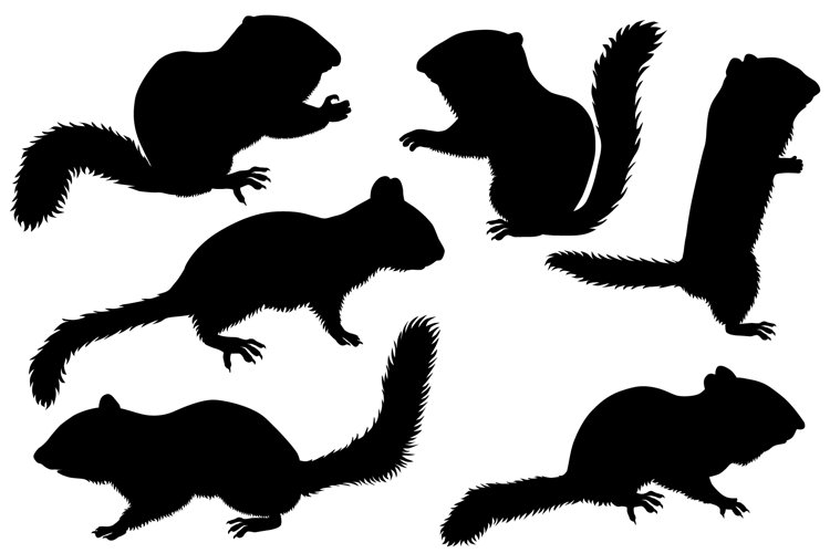 Silhouette of chipmunk example image 1