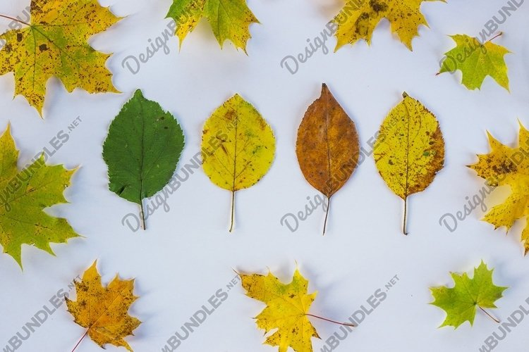 Colorful leaves. Colorful collection of autumn leaves example image 1