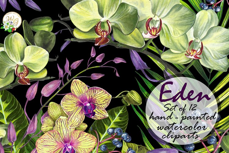 Orchid set 12 watercolor handpainted clipart, floral, wreath