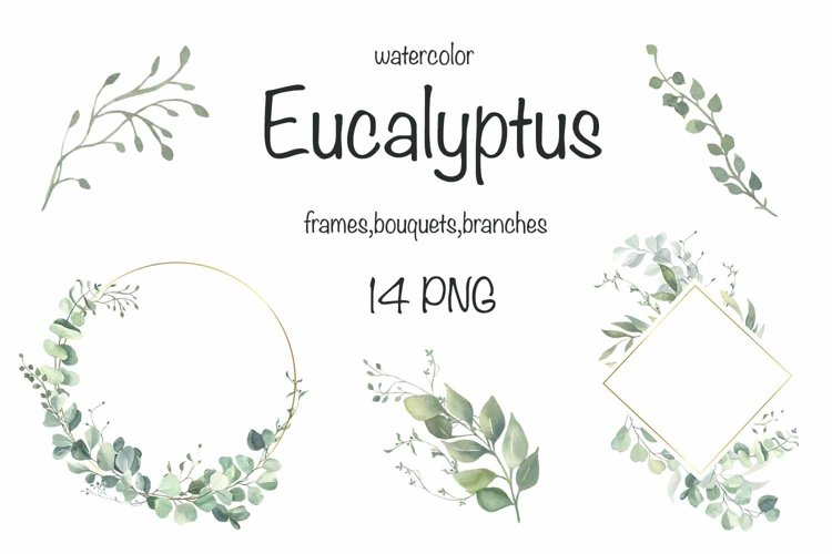 Watercolor Eucalyptus Wreath Clipart. example image 1