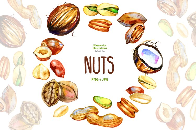 Watercolor nuts example image 1