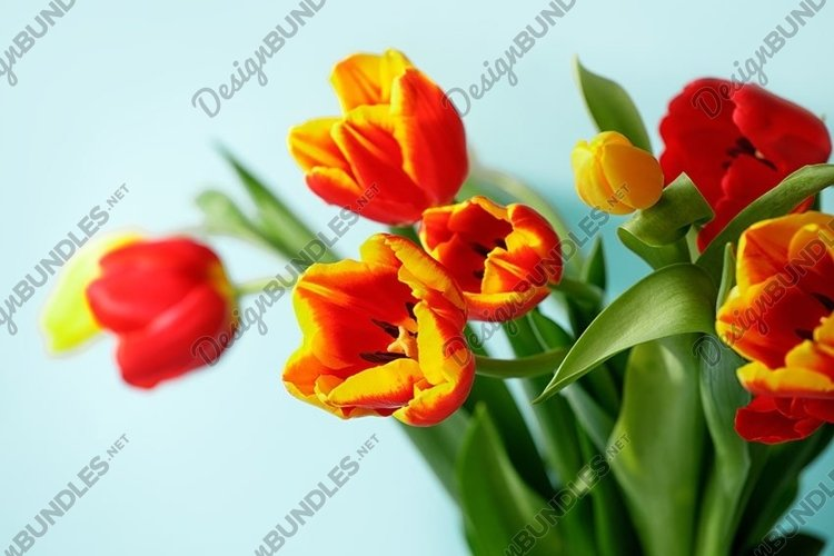 Yellow red tulip flowers bouquet on blue background