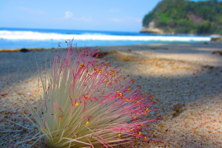 flower by the beach