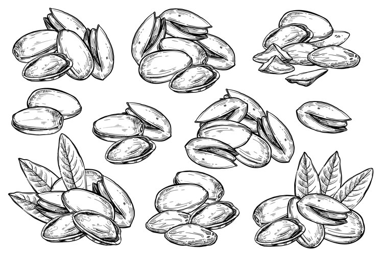 Pistachio vector isolated on white background. example image 1