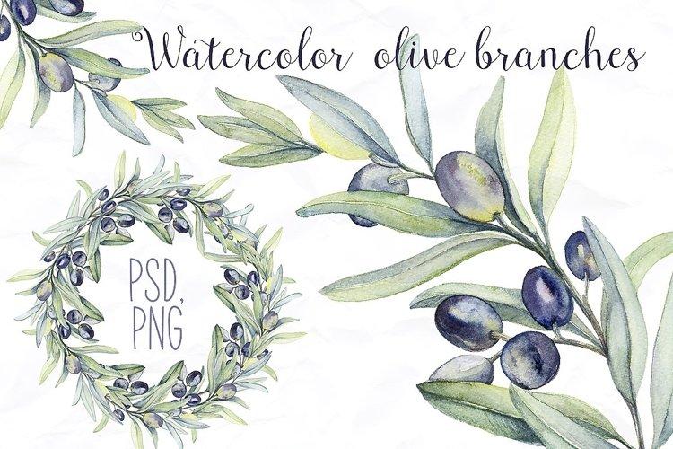 Watercolor Botanic Olive Branch