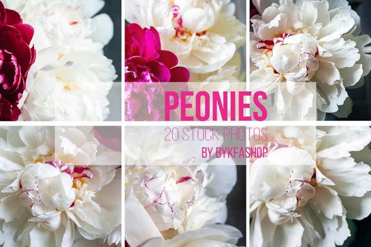 Bouquet of white and pink peonies Photo Bundle