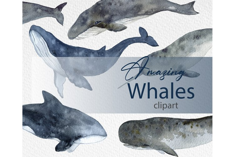 Watercolor clipart. Whale Art. Digital stickers Summer