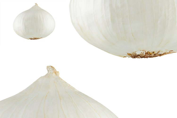 White onion with green sprout. example image 1