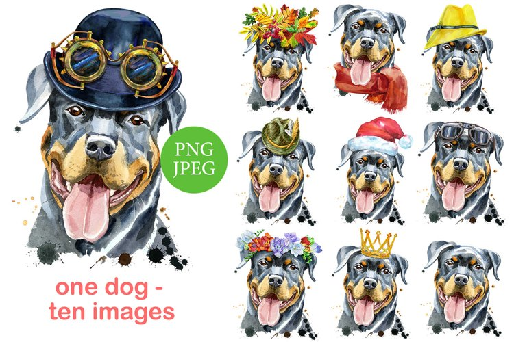 Watercolor funny rottweiler