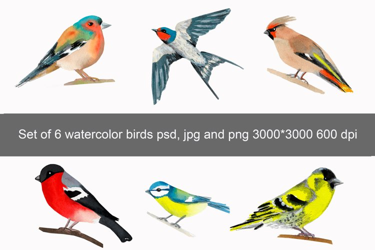 Set of 6 watercolor birds example image 1