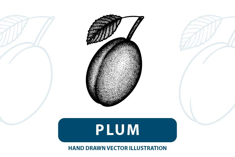 Plum engraving style vector illustration. example image 1