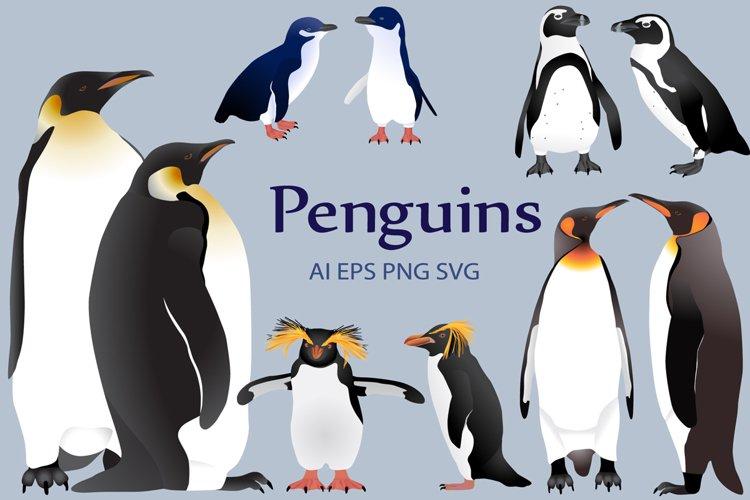Penguins colour