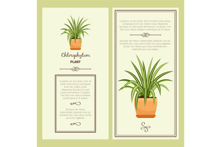 Greeting card with chlorophytum plant example image 1