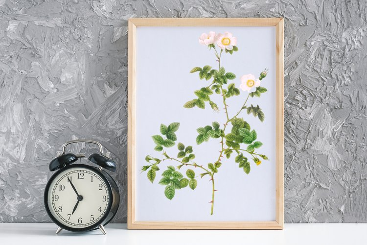 White Vintage Flowers, Botanical IlIustration, Vintage Rose example image 1