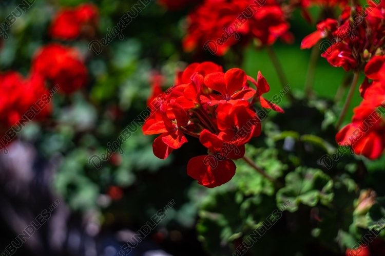 Red flowers in a park example image 1