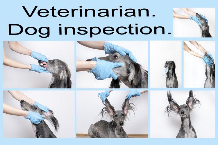 A set of 8 photo veterinary examination of a dog.