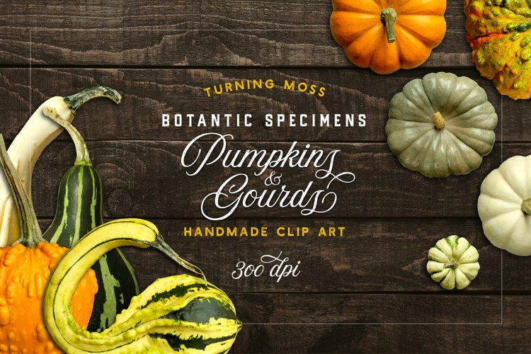 Pumpkins & Gourds - 33 Realistic Elements - Fall & Autumn