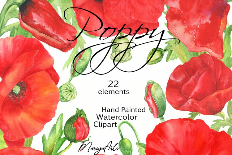 Red Poppy Flowers Watercolor Clipart, Botanical Illustration