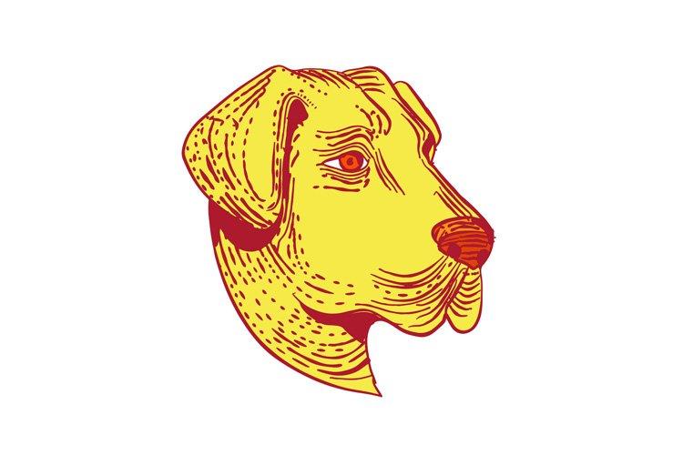 Anatolian Shepherd Dog Head Etching Color example image 1