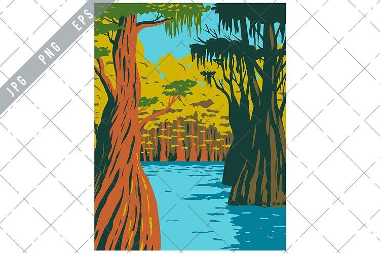 Bald Cypress Growing in Owl Creek in Apalachicola WPA example image 1