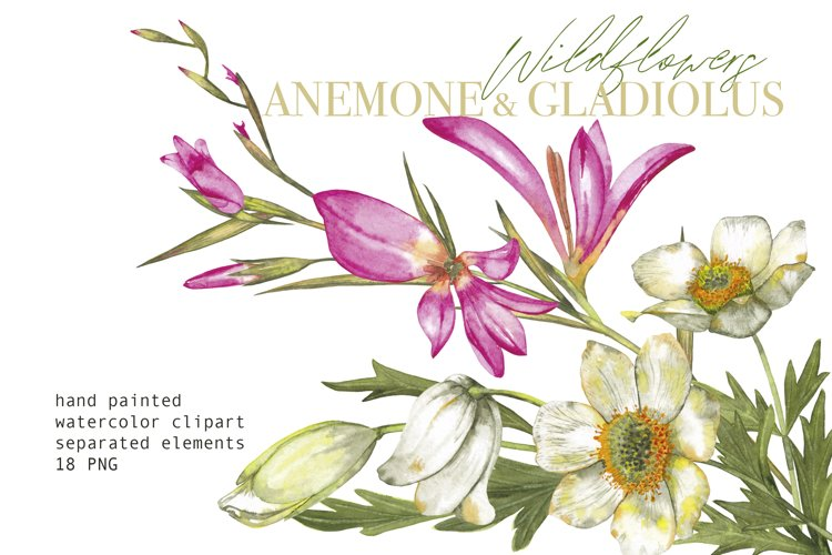 Watercolor floral clipart Anemone Gladiolus wildflowers PNG