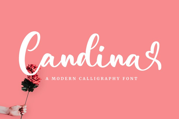 Candina - Lovely Script Font example image 1