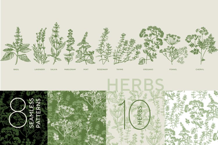 Herbal illustration and patterns - French   Italian cooking
