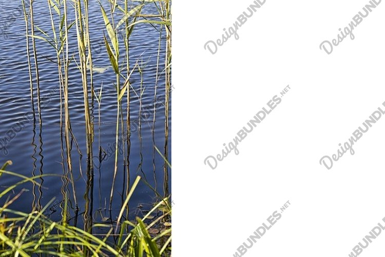 river and grass example image 1