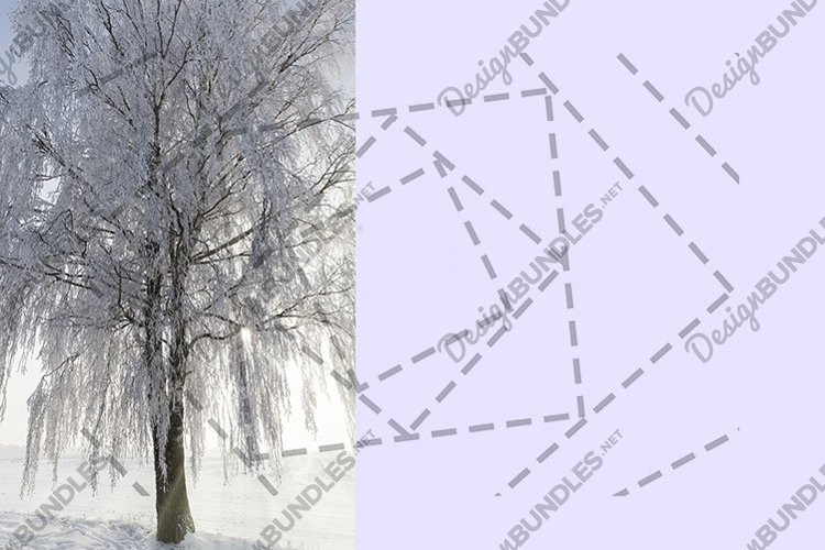 birch snow sunshine example image 1