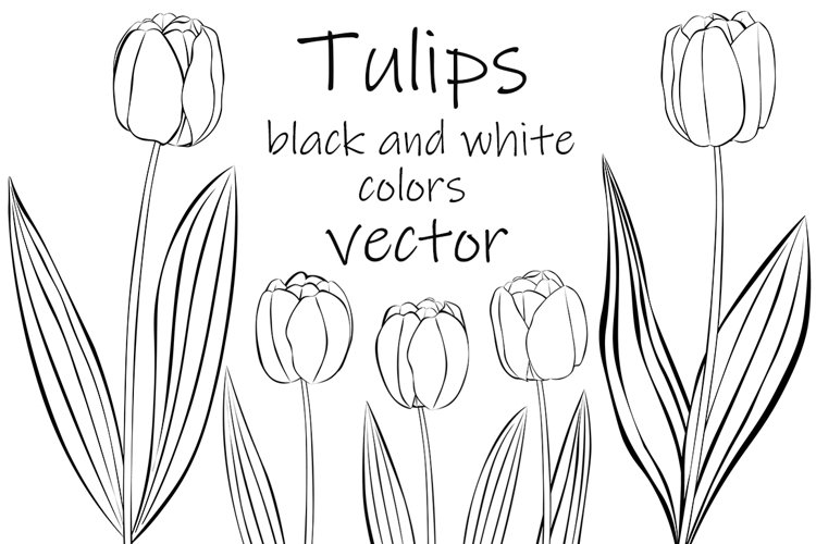 Tulips vector. Tulips graphics. Tulips flower. Tulips SVG example image 1