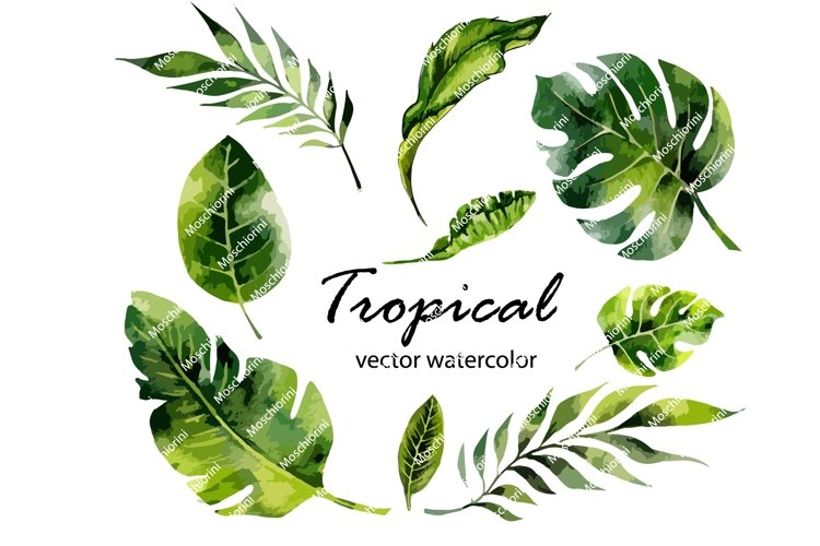 Set Eps of illustrations of the tropical watercolor leaves example image 1