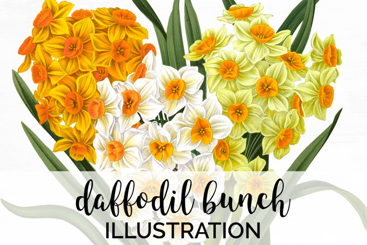 Daffodil Clipart Yellow Flowers Vintage
