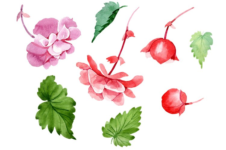 Begonia flower plant PNG watercolor set example image 1