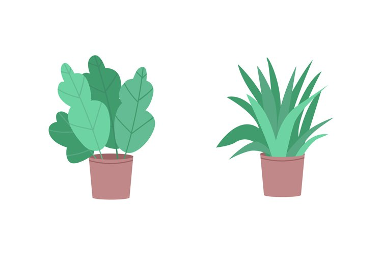 Tropical houseplants flat color vector object set example image 1