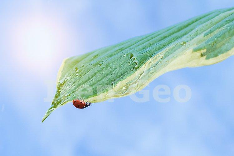 Ladybug on a green leaf against the blue sky