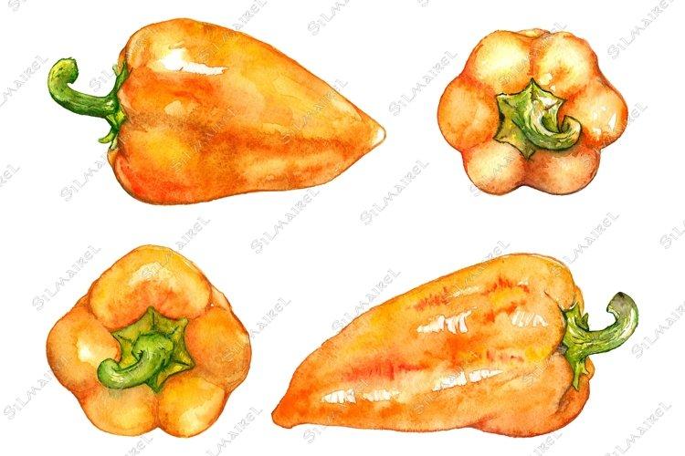 Watercolor orange sweet bell Bulgarian pepper vegetable example image 1