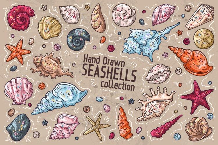 Seashells Collection
