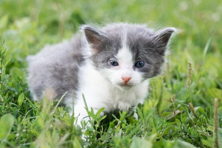 kitten on the grass example image 1