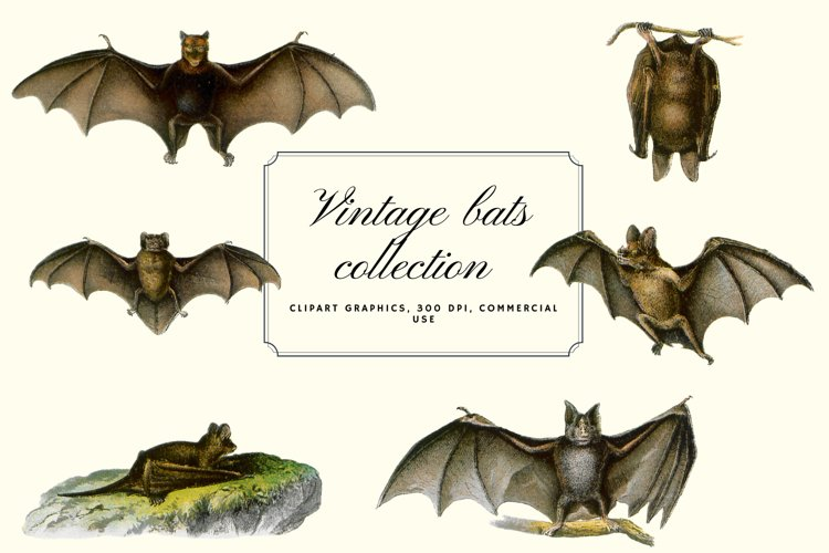 Vintage Bats Collection, Creepy Graphics Illustration example image 1