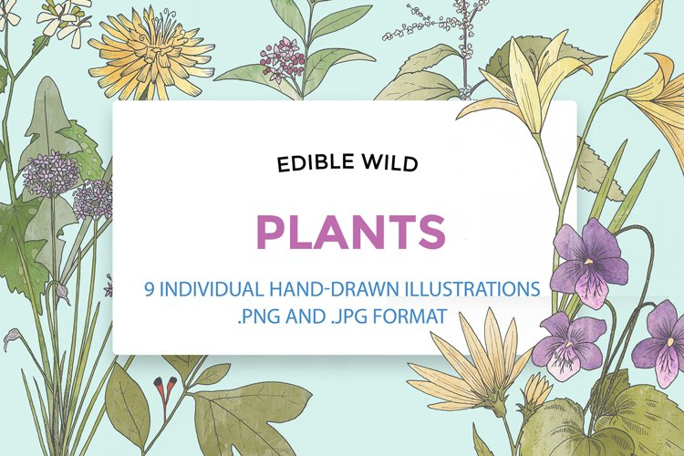 Hand Drawn Edible Flowers example image 1