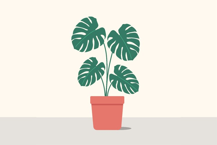 Monstera potted plant in pot in flat design example image 1