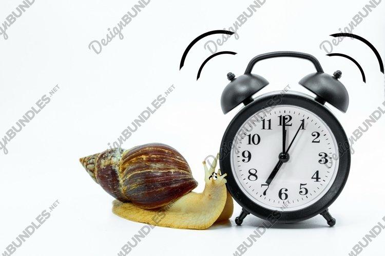 Funny snail Achatina