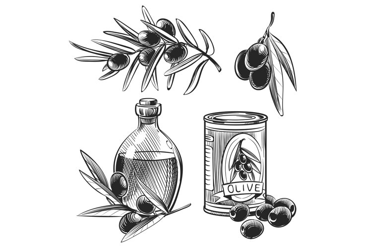 Hand drawn olive oil bottles and olives example image 1