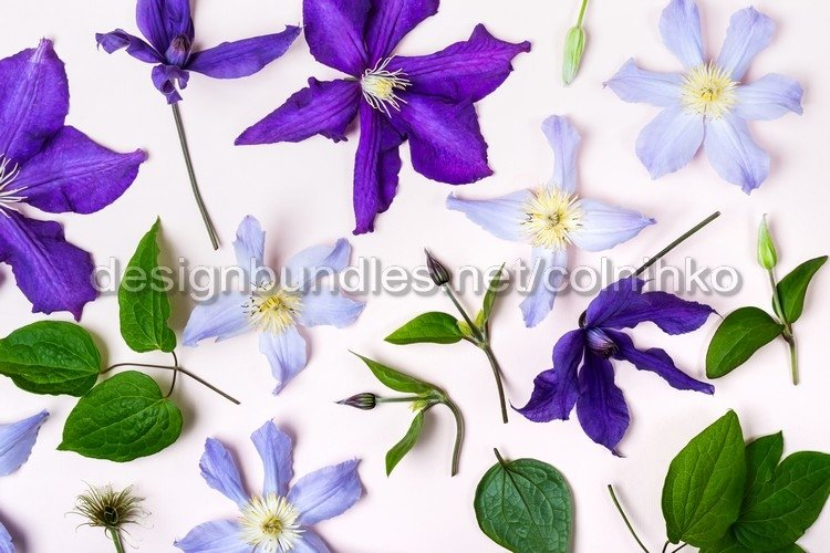 Summer floral background example image 1